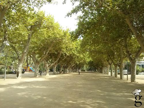 parc teodor gonzalez_tortosa_glutoniana